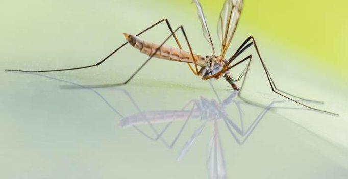 rimedi anti-zanzare